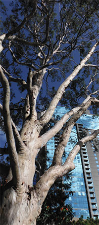 tree trunk and branches with blue Honda building reflecting the sky in the background